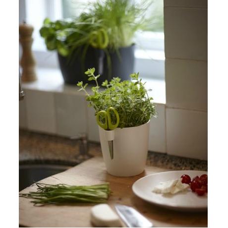 Brussels Herbs Single