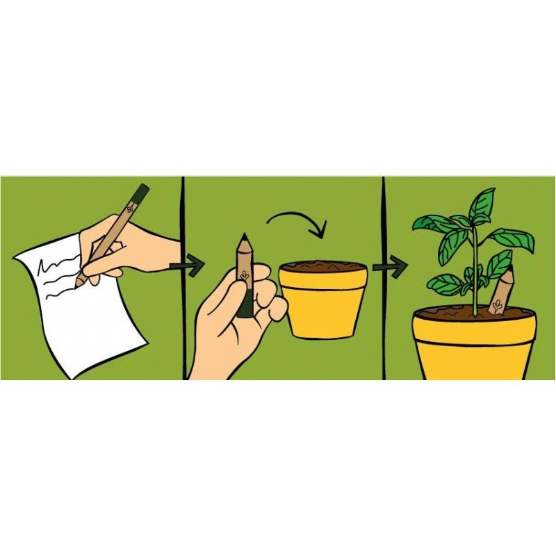Plant eens een potlood