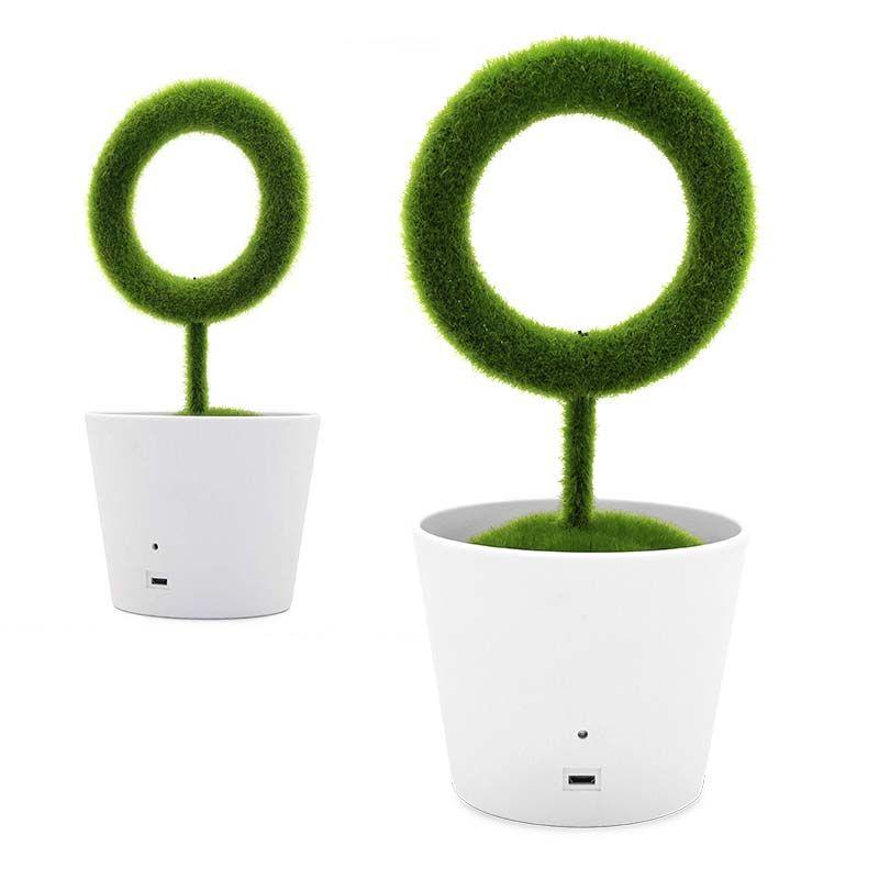 Groene decoratieve lucht zuiverende  plant