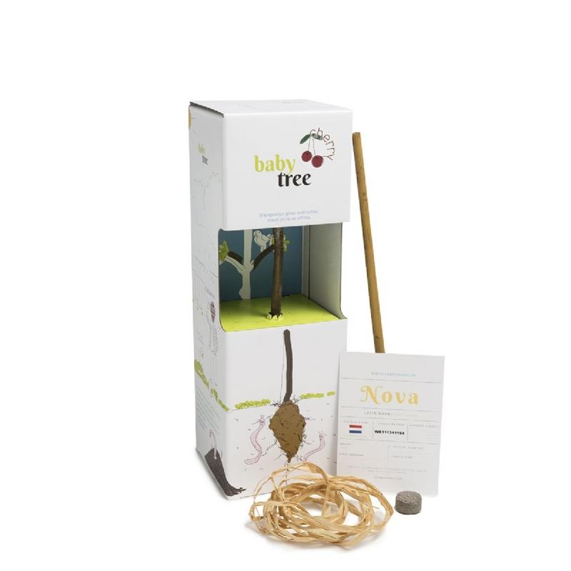 Baby Tree, doe-het-zelf-fruitboompakket