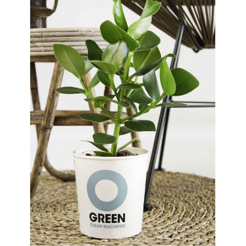 Luchtzuiverend plantje