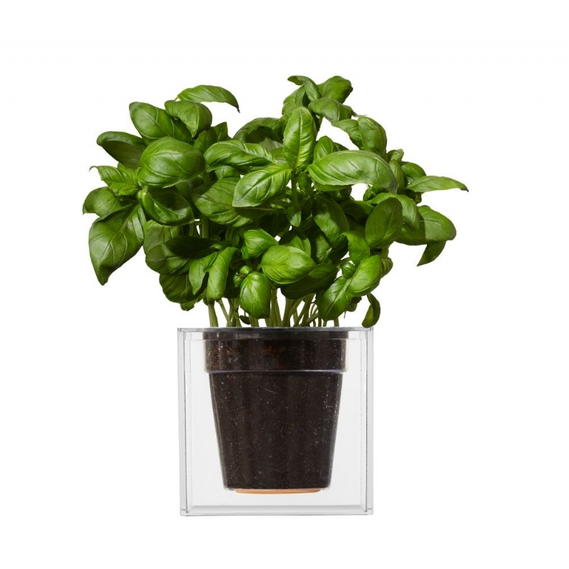 Plantenbak vergeet-me-niet