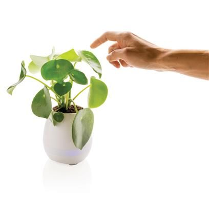 Maak muziek met een plantje